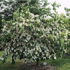 B ume im garten planen in 4 schritten garten pflanzen for Gartengestaltung chinesisch