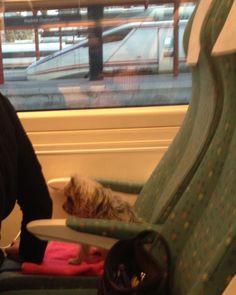 """Definitivamente la RAE debe cambiar la definición de """"viajar como un perro""""..."""