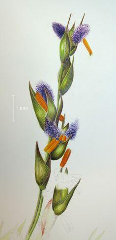 Denver Botanic Gardens School Of Botanical Art And Illustration Is Designed To Teach The Skills