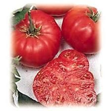 The Beefsteak tomato is a large tomato that's great for slicing or for sandwiches.   The fruits are very meaty and have small seed cavities. The Beefsteak is also a great tomato for eating plain! Average: 80 days