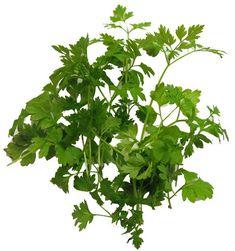 Spansk kjørvel Healthy Food, Healthy Recipes, Parsley, Herbs, Healthy Foods, Healthy Eating Recipes, Herb, Healthy Eating, Health Foods