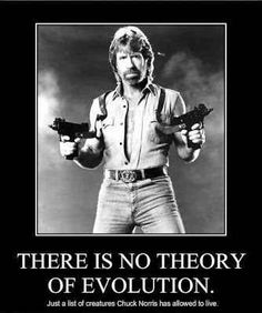 Yes, I do think the Chuck Norris jokes are funny :-)