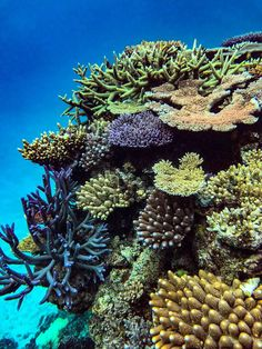 Photo by Garrett Hargiss. Coral Life, Brain Drawing, Brittle Star, End Of Spring, Underwater Pictures, Great Barrier Reef, Corals, Atlantis, Sea Creatures