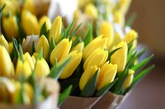 Have always loved yellow tulips
