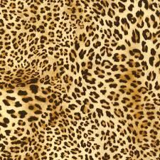 Image result for all things leopard print