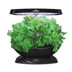 Top 15 Best Indoor Herb Garden Kits Reviews 2019 Updated 400 x 300
