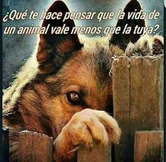 Loving an animal is the privilege of a few. Respecting and not mistreating is everyone's duty. Love Pet, I Love Dogs, Cute Dogs, Animals And Pets, Cute Animals, Jolie Phrase, Amor Animal, Schaefer, Stop Animal Cruelty
