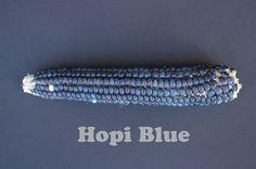 Hopi Blue