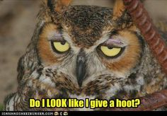 Books, Cats, Movies and Coffee: Funny Owls ...