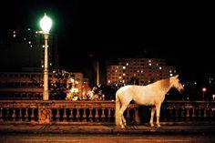 """""""Noturno"""" mostra um cavalo abandonado correndo pelo viaduto de uma cidade fantasma. Visitação começa sexta-feira, 11, com entrada Catraca Livre"""