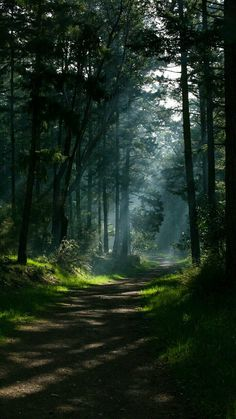 Morning forest..