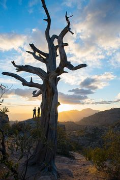 Mt. Lemmon Tucson, AZ