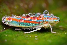 Leafhopper, A Bug's Life, View Image, Drop, Animals, Bugs, Color, Bubbles, Stripes