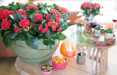 Colour boost your interior with the lovely and versatile Kalanchoe. Want to get more inspiration? Check out Kalanchoe.nl