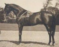 Persimmon (1893–1908) was a British Thoroughbred race horse and sire. In a racing career that lasted from June 1895 to July 1897 he ran nine times and won seven races. His victories included 1896 Epsom Derby, one of the first horse races ever filmed, by Robert W. Paul. His other important victories included the St. Leger, the Ascot Gold Cup and the Eclipse Stakes. He was also notable for his rivalry with another English colt St. Frusquin, who inflicted his only two defeats.