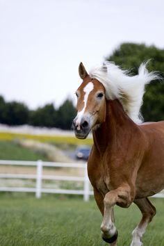 Fotoshooting mit Haflingerstute Gracia & Manuela Reidinger auf der GR-Ranch in Unterrohrbach, Österreich Horse Love, Portrait, Ranch, Horses, Photography, Animals, Photoshoot, Guest Ranch, Animales