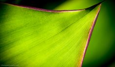 Macro photography by Stephen Taylor