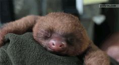 NOW LOOK AT THIS SLEEPY SLOTH: | 17 GIFs That Will Help Us Achieve World Peace