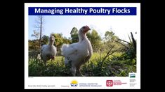 Webinar Alert! Biosecurity for Pastured and Organic Poultry. Join ATTRA Poultry Specialist Kevin Ellis to learn about proactive steps you can take to increase biosecurity on your farm by planning ahead of your chicks' arrival and through day-to-day management. #ATTRA #NCAT #poultry #biosecurity #avianflu