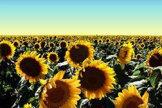 Na plenitude da felicidade, cada dia é uma vida inteira. (Johann Goethe)