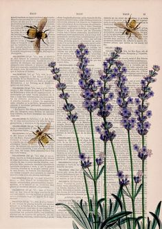 Bees with Lavender Print - Housewarming Gift - Bee Wall Art .-Bees with Lavender Print – Housewarming Gift – Bee Wall Art – Dictionary Art Print – Book Page Art – Flower Book Print – Wall art home decor Bees with Lavender flowers by PRRINT on Etsy - Art Du Collage, Photo Wall Collage, Painting Collage, Wall Prints, Poster Prints, Art Print, Poster Wall, Fun Prints, Art Posters