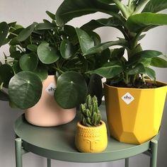 32 Elho Bright Colours Ideas Colours Plants Flower Pots