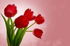 Free Image on Pixabay - Flowers, Tulips, Valentine, Romance Good Morning Sweetheart Images, Good Morning Image Quotes, Good Morning Beautiful Images, Good Morning Photos, Flower Images, Flower Pictures, Flower Art, Public Domain, Romance
