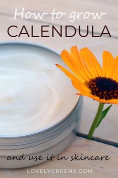 How to grow Calendul
