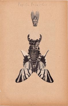 Lucio Palmieri #collage #art #insects