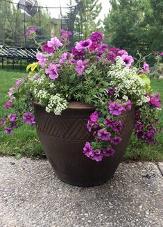 Going to Pot Without Breaking the Bank - Gardening in a Harsh Climate Large Flower Pots, Flower Planters, Balcony Flowers, Container Flowers, Container Plants, Container Gardening, Small Yard Landscaping, Outdoor Plants, Trees To Plant