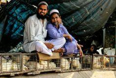 Interview: Reizigers over India
