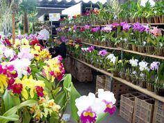 Dicas para visitar a Feira de Flores da Ceagesp - Liquidação e cia.