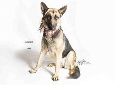 www.PetHarbor.com pet:MRVL.A469623