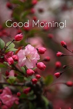 Good Morning Flowers Gif, Good Morning Picture, Morning Pictures, Good Morning Images, Good Morning Quotes, Beautiful Pink Roses, Pretty Flowers, Pink Flowers, G Morning