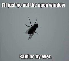 Said no fly ever