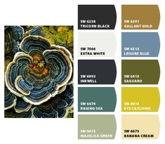 Fungus - Go figure!  Paint colors from Chip It! by Sherwin-Williams