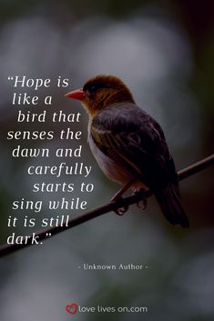 This quote reminds us of the importance of having hope in our time of grief as we remember our special Dad. Click for 21+ more remembering Dad quotes. Bird Quotes, Nature Quotes, Quotes About Birds, Motivation Positive, Positive Quotes, Quotable Quotes, Wisdom Quotes, Happiness Quotes, Quotes Quotes