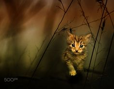 Lost in woods... by Eleonora Di Primo on 500px