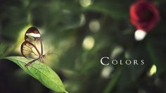 Colors Mother Nature by by D'Alessandro Photography by D'Alessandro Photography. Directed,Writen and Edit  by Alessandro Cirillo ©
