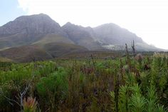 Helderberg mountain Somerset West, Nature Reserve, South Africa, Flora, Earth, Mountains, Places, Photos, Travel