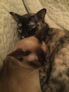 Hatchi och Madde