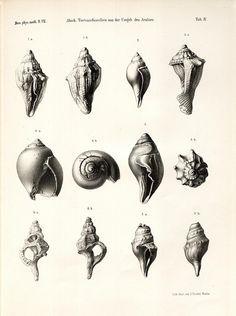 seashell - Поиск в Google