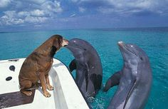 I seen this on Youtube, so cool ya gotta chk it out! Type in Dolphin kissing Dog (-: