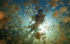 クラゲと遊べる塩水湖の魅力とは?!【ジェリーフィッシュレイクinパラオ】 | RETRIP[リトリップ]