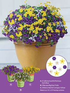 "Container Gardens made easy! For a bold look, plant the following in our 16"" or 20"" Bombay container:  A. 3 Calibrachoa MiniFamous Dark Blue  B. 3 Bacopa Big Pearl Falls  C. 3 Bidens Namid Compact Yellow"
