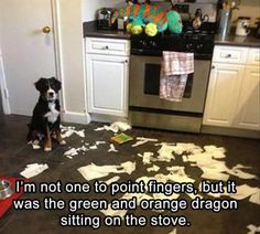 25 Funny Animal Pics for Your Sunday | Page 23 | Love Cute Animals