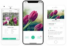 Instantly identify plants by photo! Horticulture, Site Photo, Identify Plant, Synthetic Resin, Plant Identification, Plant Species, Photos Du, Bushcraft, Bike Baskets