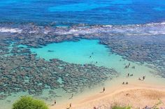 Hanauma Bay Tours provides daily round trip shuttle rides from the Waikiki Hotels to Hanauma Bay that includes your all your snorkel gear. Book one NOW! Snorkel Gear, Hanauma Bay, Best Snorkeling, Round Trip, Lifeguard, Hawaii, Hotels, Tours, Book