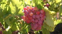 El consumo de fruta reduce el riesgo de diabetes tipo 2 |