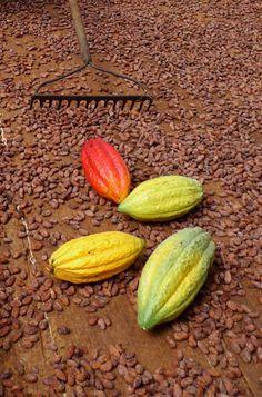 Gallery — Cacao Prieto